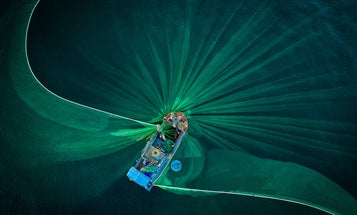 Bathing monkeys, squabbling birds, and more captivating Smithsonian Photo Contest finalists