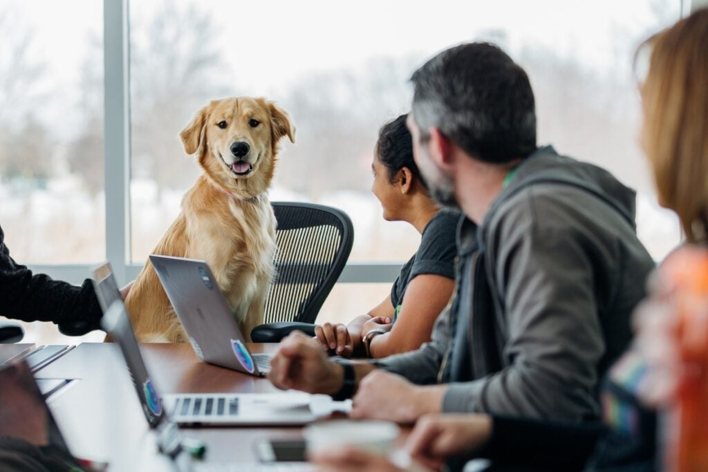 a golden retriever dog sitting at a conference table