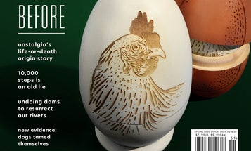Watch this gorgeous timelapse of the making of our 'chicken and egg' cover
