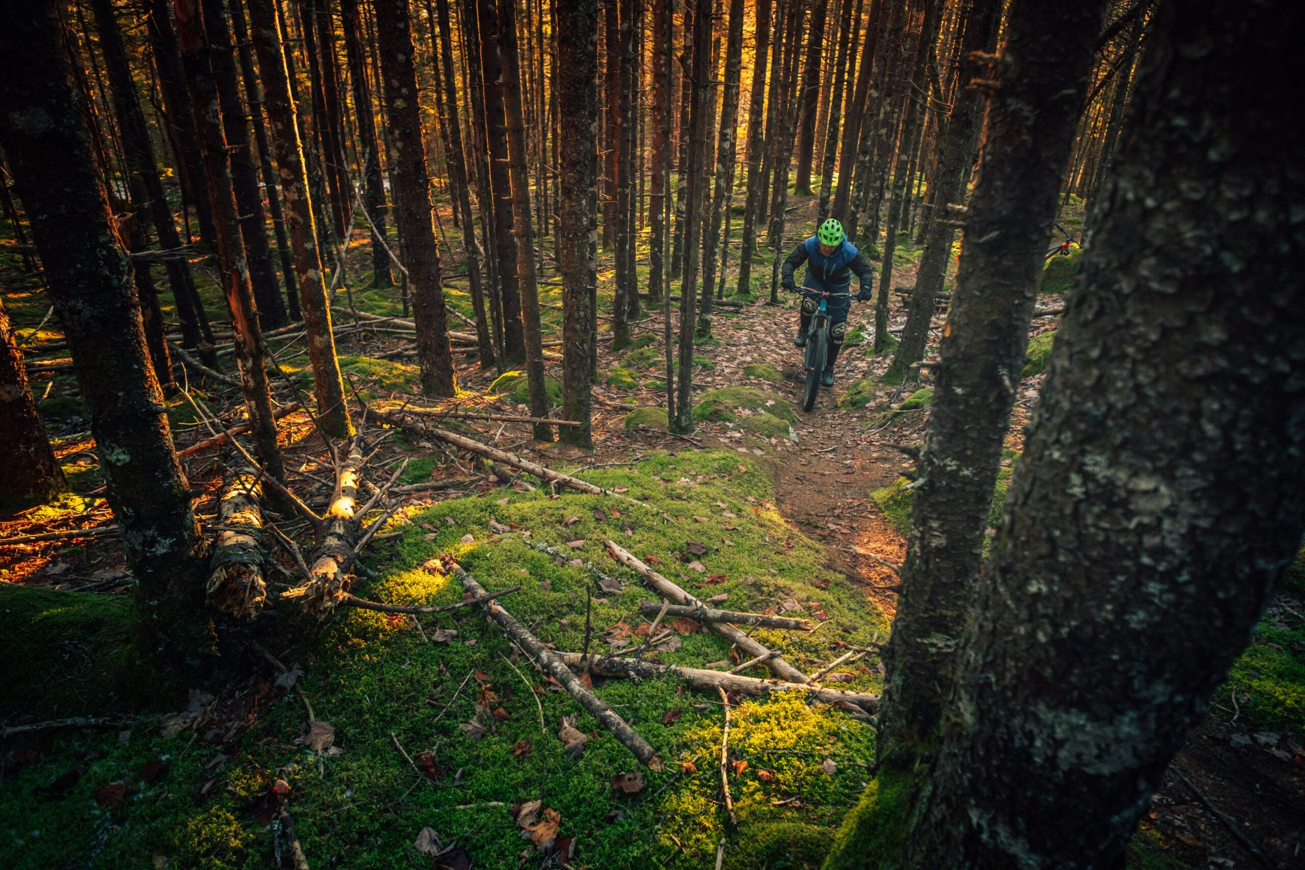 Lone biker in the woods
