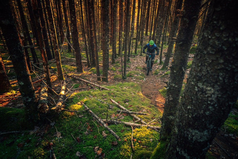 Lone biker in the woods