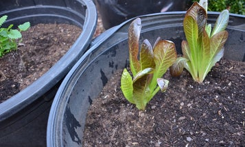 How to start your own survival garden