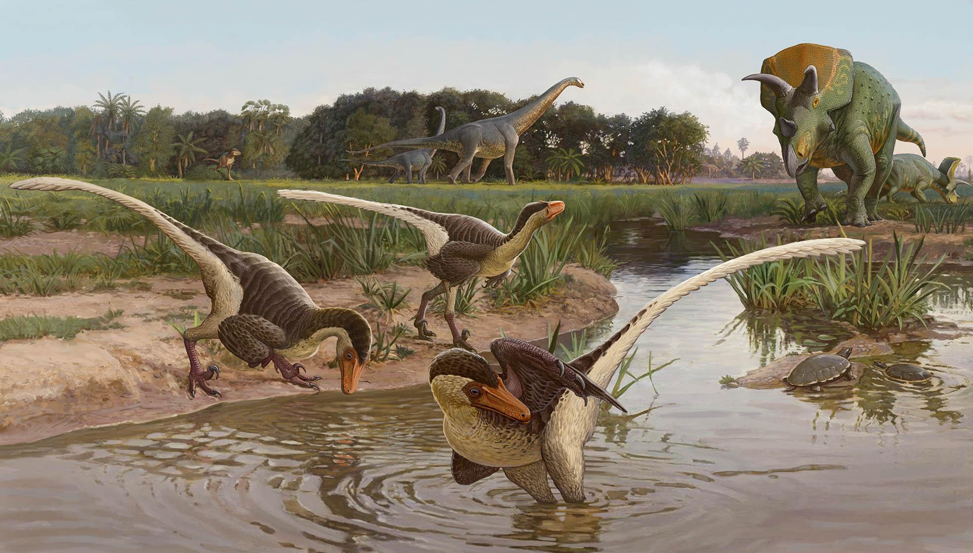 the newly discovered dinosaur: Dineobellator notohesperus