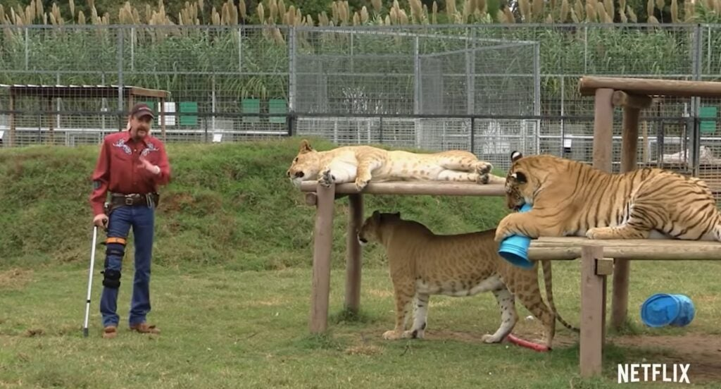 A screenshot of the Tiger King trailer from Netflix