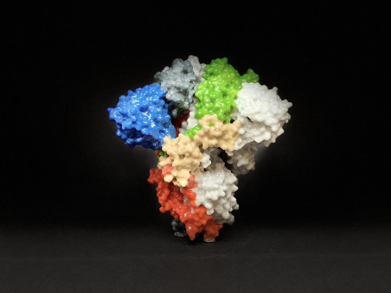 coronavirus spikey protein structure.
