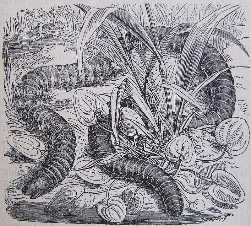 a drawing of a large worm