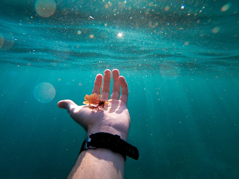 hand underwater with a watch