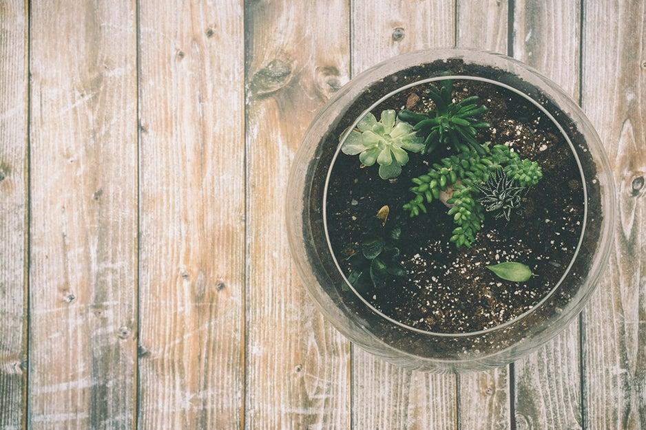 terrarium on a table