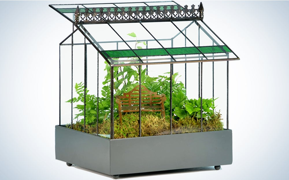 Deco Glass Geometric Greenhouse Terrarium, Succulent & Air Plant