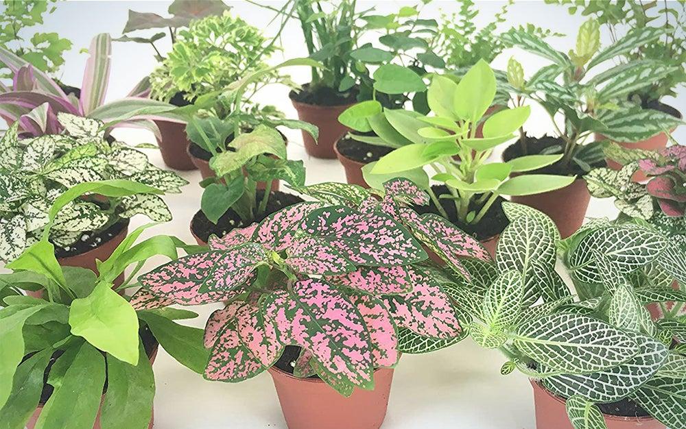 Mini Terrarium Plants
