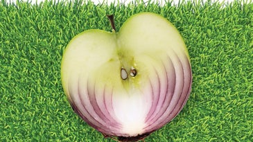 apple and onion on grass Images;