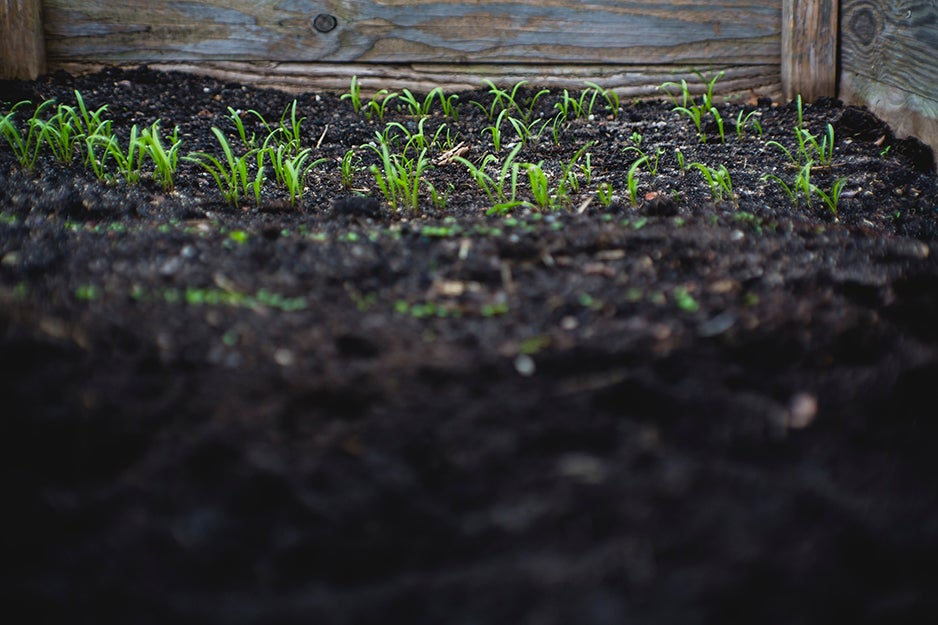 soil with plants growing