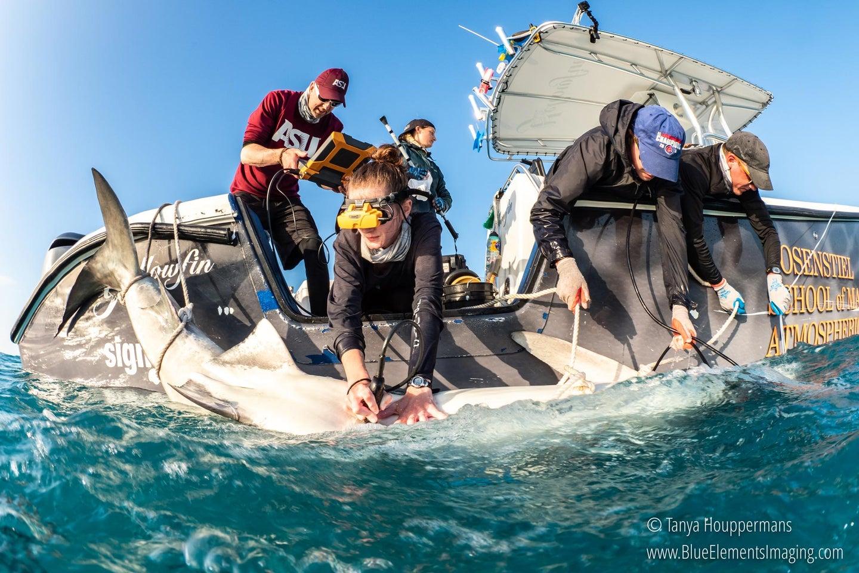 shark birth science