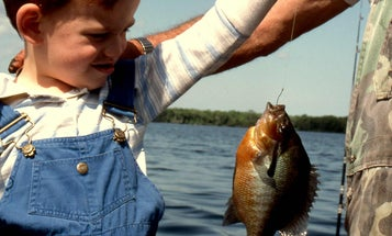 A beginner's guide to freshwater fishing