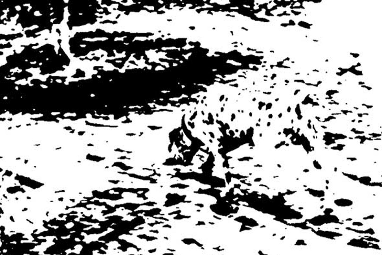 gestalt dalmatian