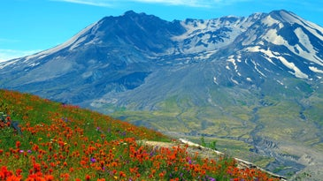 A current view of the South Colwater Ridge Trail at Mount Saint Helens in Washington.