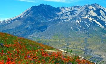 After Mount St. Helens erupted, scientists fought to preserve its devastation