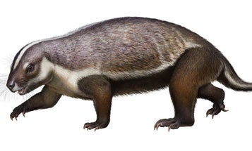 This 'crazy beast' is unlike any mammal we've ever seen