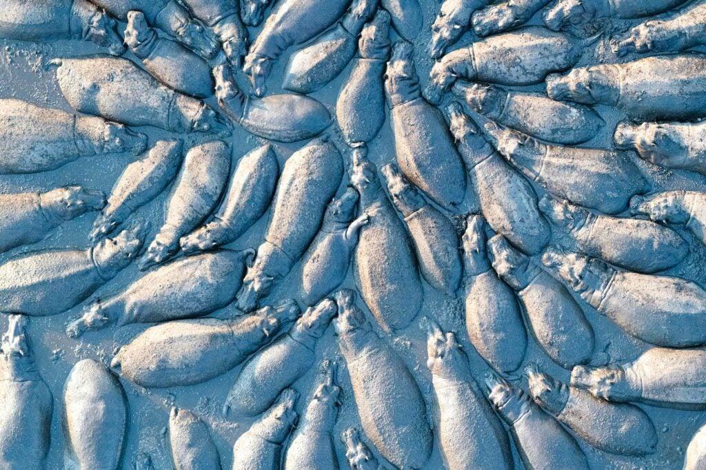 Hippo Huddle