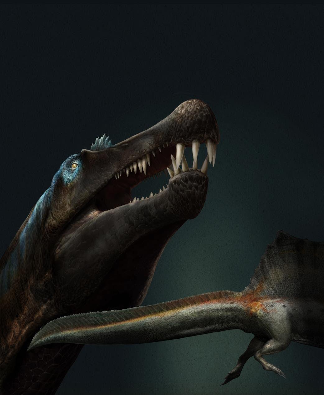 Reconstruction of Spinosaurus in life