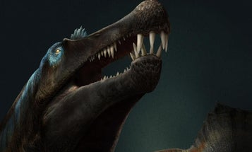 Most dinosaurs didn't swim—but this 'dino equivalent of Jaws' sure did