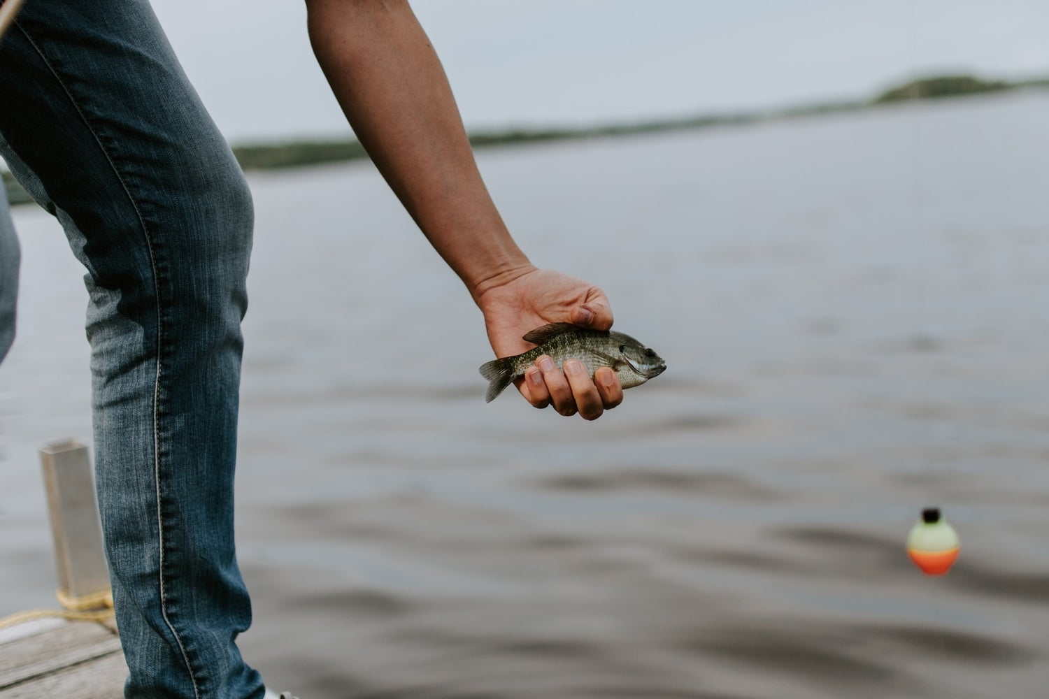 a person holding a small fish while standing on a dock on a lake