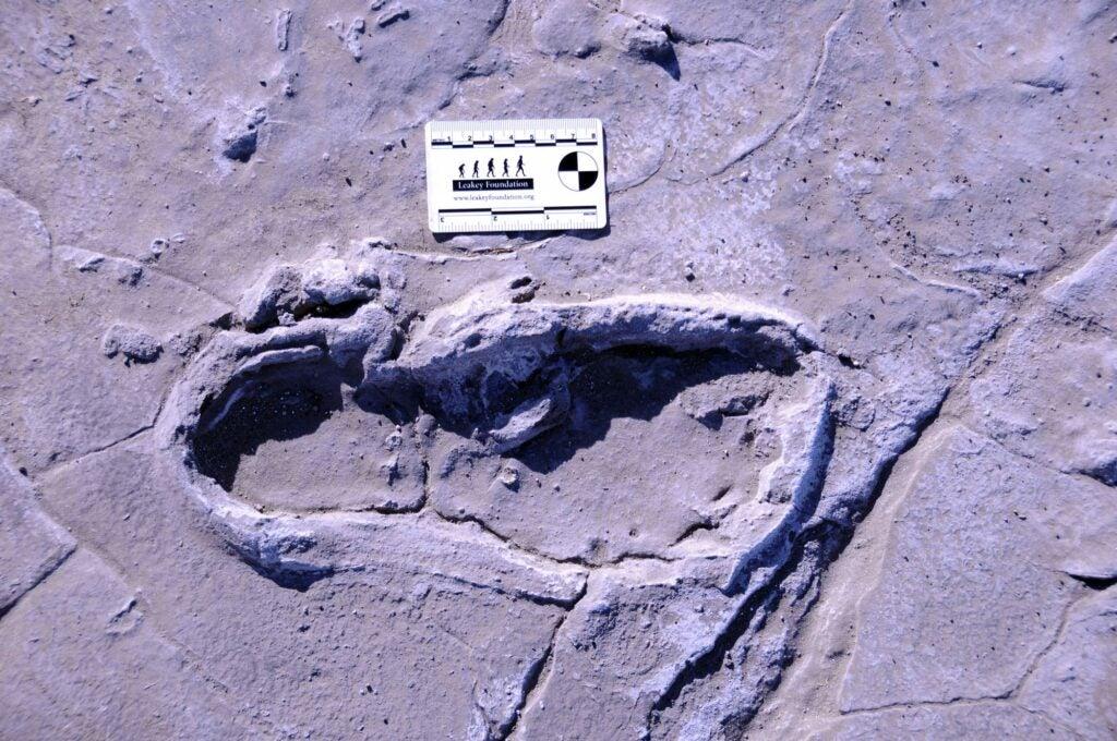 preserved footprint