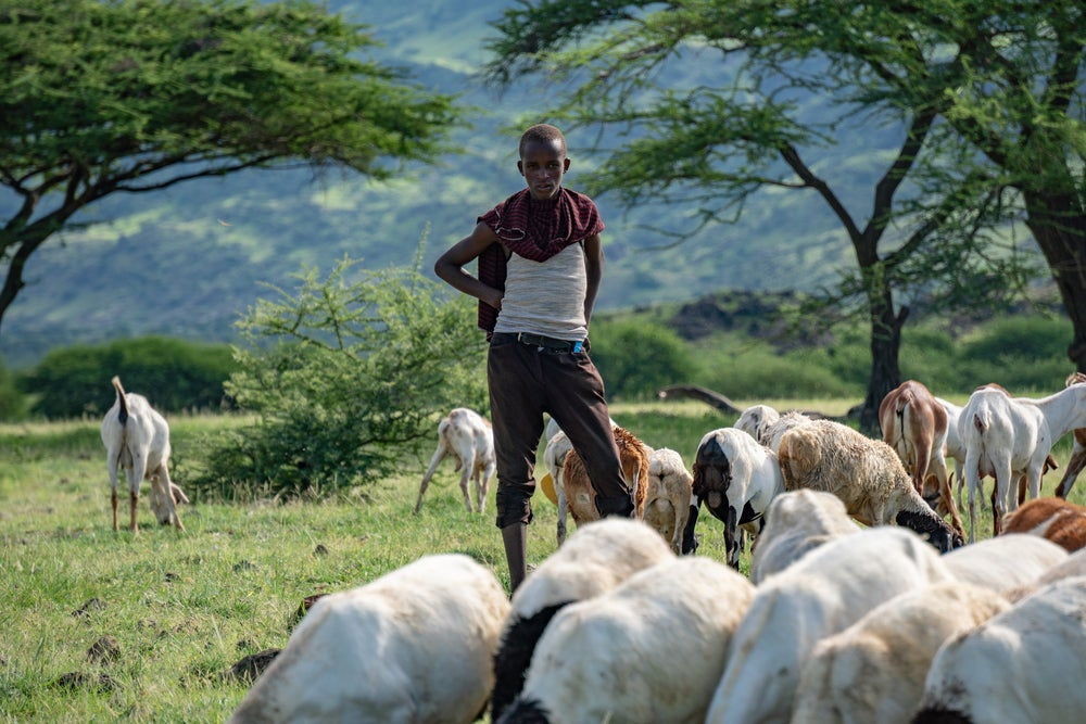 A Maasai youth with a goat herd in Tanzania