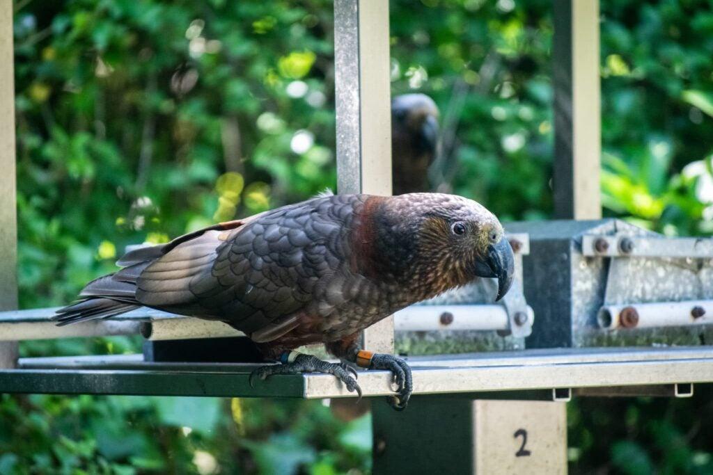 New Zealands animals