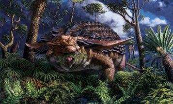 Mummified ankylosaur offers a rare glimpse of a dinosaur's last meal
