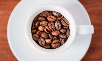 Best Coffee Beans on the Market