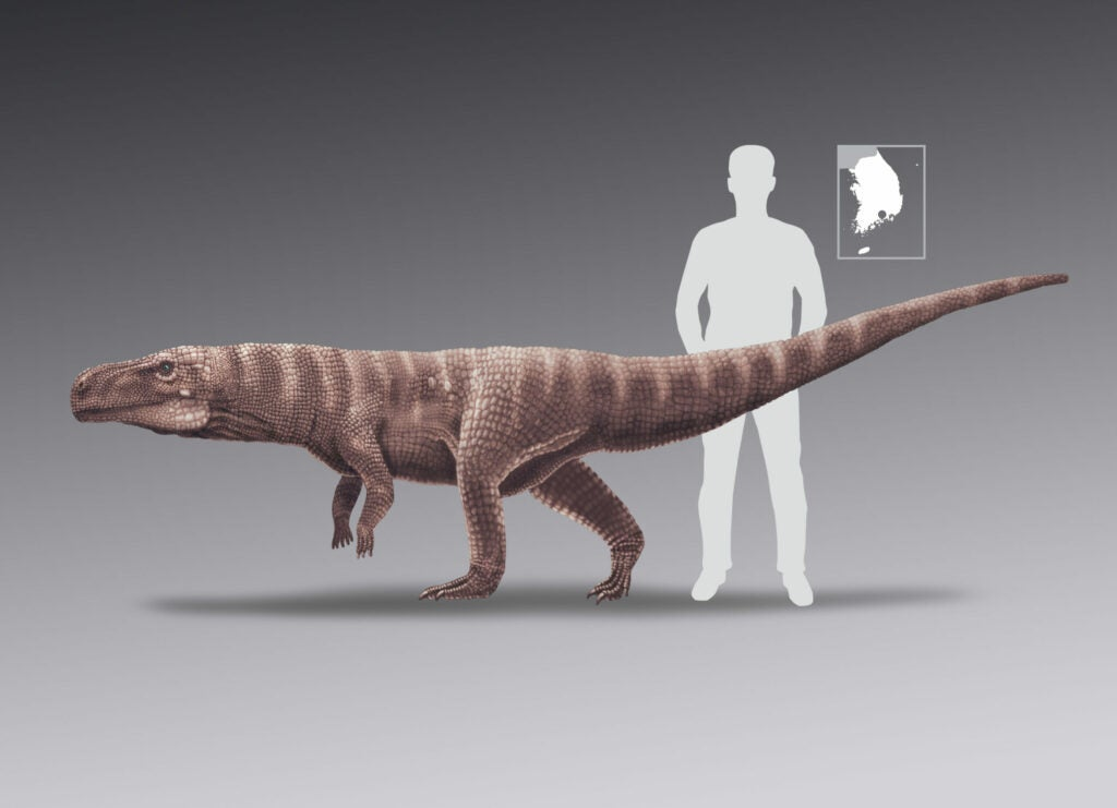 Batrachopus trackmaker to human scale.