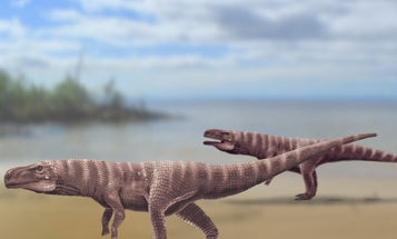 Crocodiles' ancient ancestors may have walked on two legs