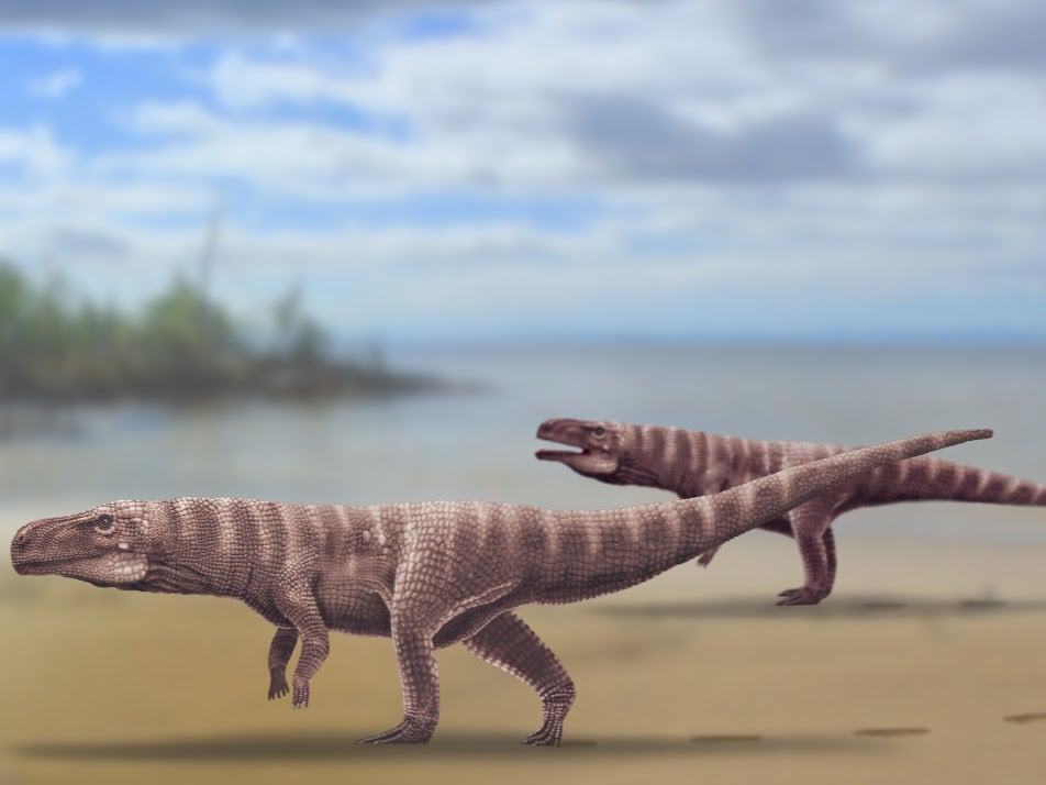 ancient ancestor of the modern crocodile, which walked on two feet.