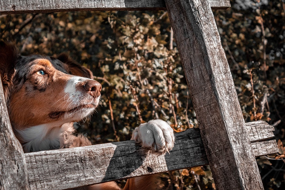 dog with paw over fence