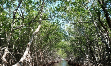 Healthy ecosystems are nature's barrier to hurricane damage
