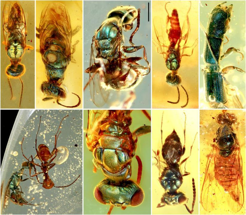 insects preserved in amber