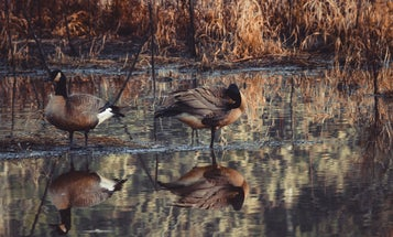 How to make effective duck hunting decoys for under $10