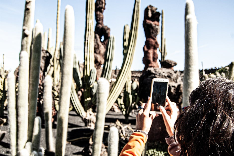 person taking picture of a cactus on phone
