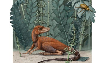 This pocket-sized shaggy reptile hopped around a pre-dino world