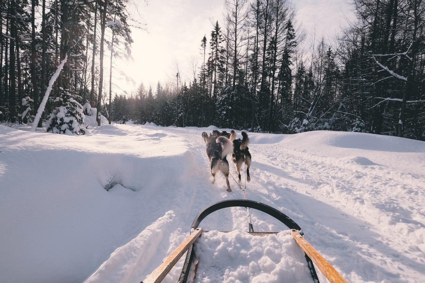 Sled pulled by dogs.
