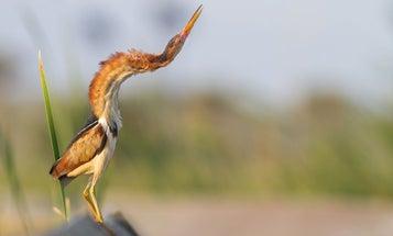 15 bird photos that will make your heart sing