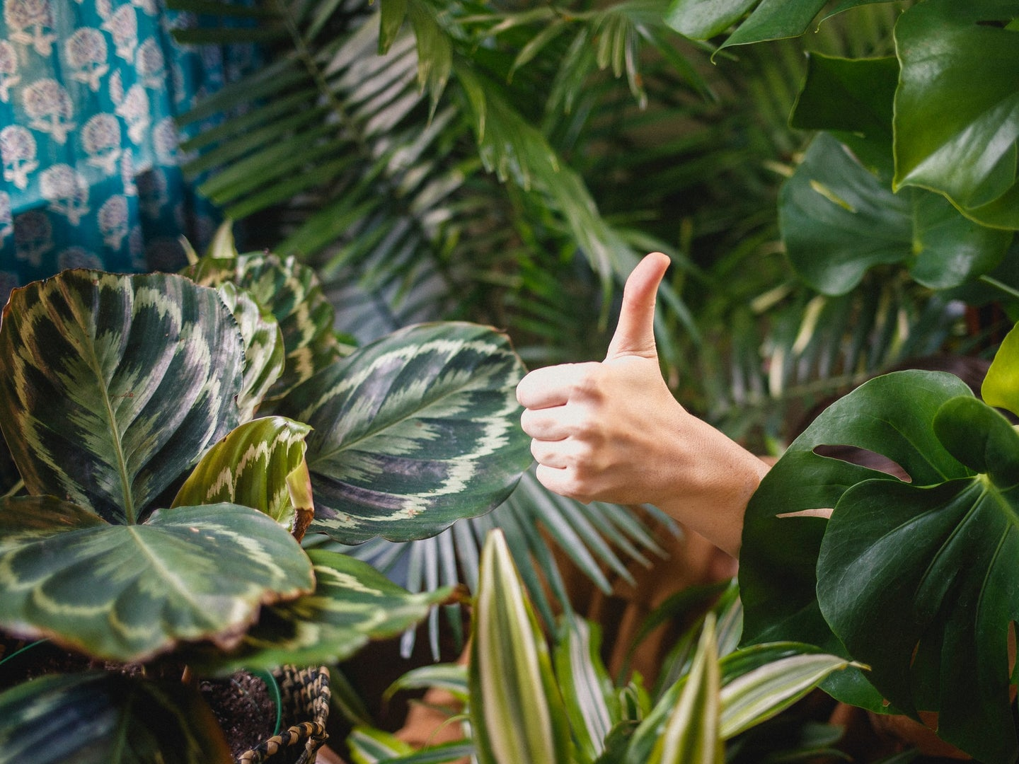 a person giving the thumbs-up in a room with drawn shades, surrounded by house plants