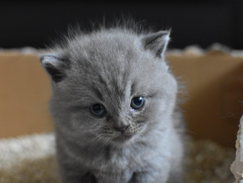 A kitten in a litter box.