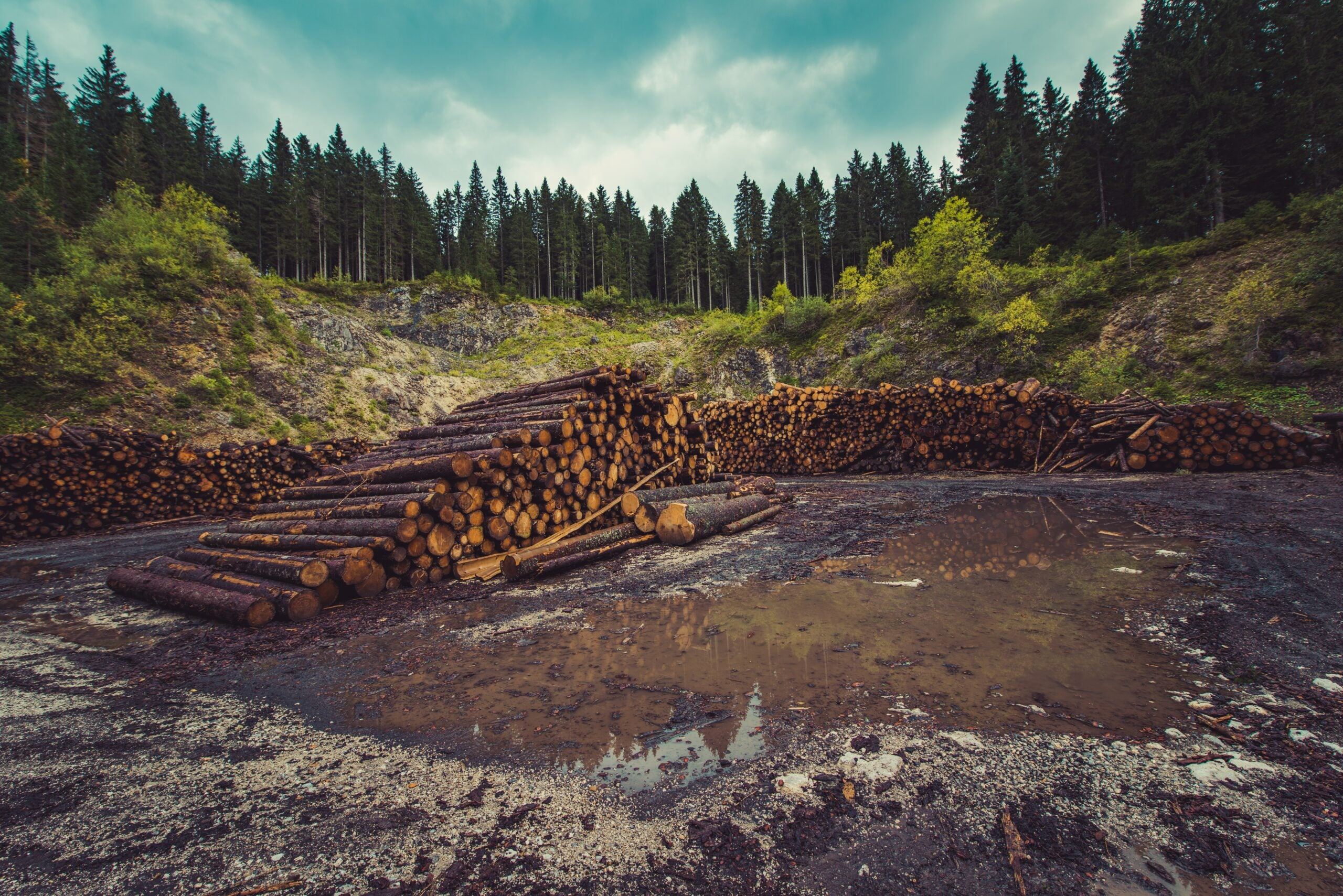 deforested area with cut logs