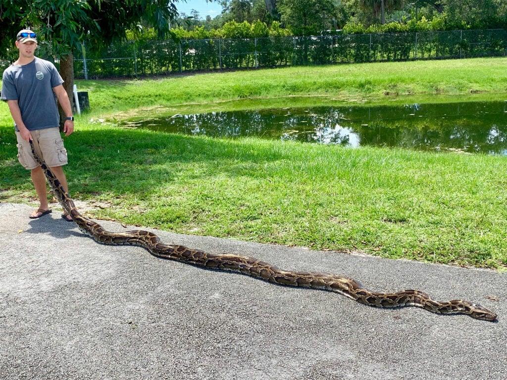 A young man standing beside a large burmese python on a sidewalk.
