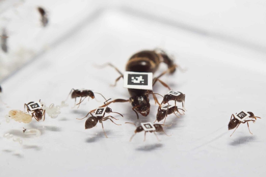 ants tagged with qr codes