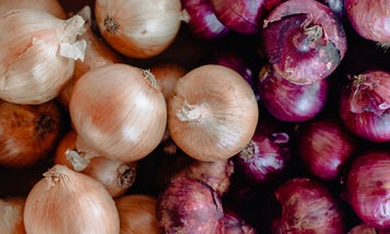 The onions in your kitchen could give you food poisoning
