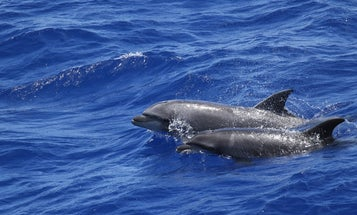 Manmade pollutants could be harming marine mammals more than we think