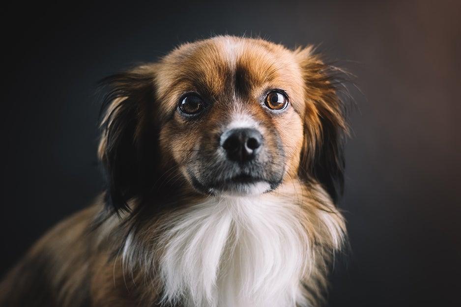 dog looking at a camera